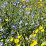 flaxseed plants in meadow